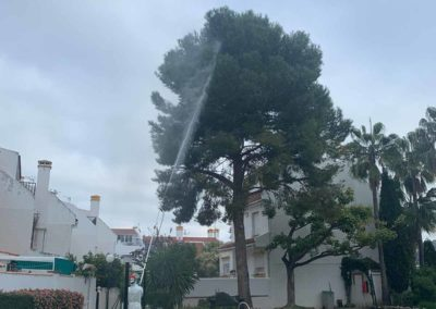 Eliminar oruga procesionaria del pino con pértiga